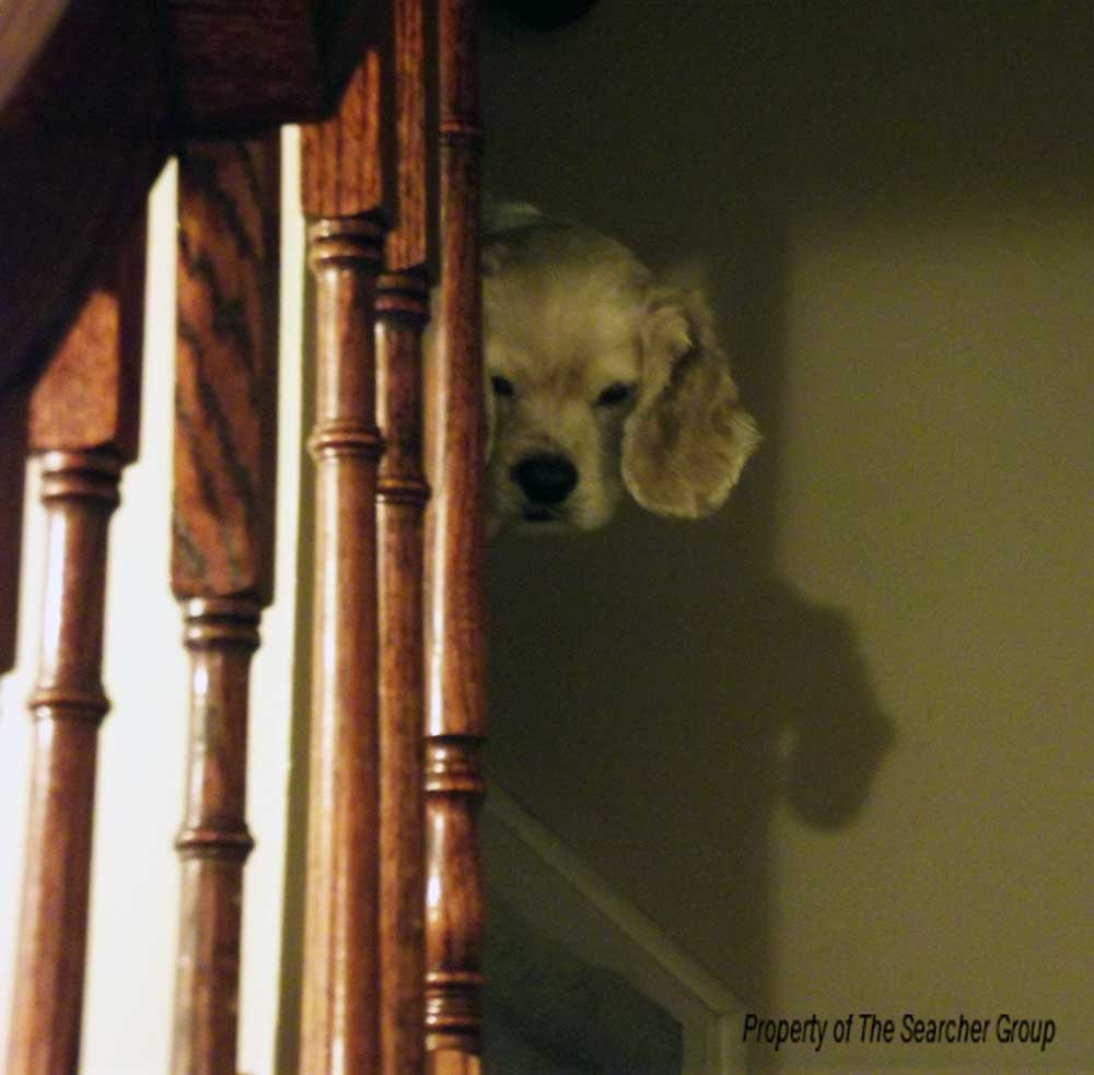 dog looking down staircase