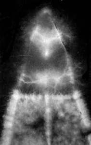Kirlian Half Leaf